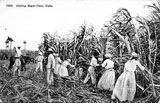 Straw hats used in sugar plantations